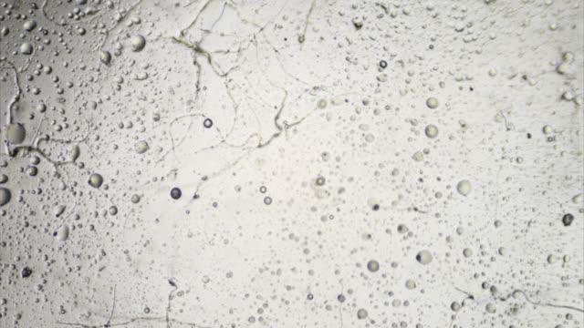 Growing fungi time lapse