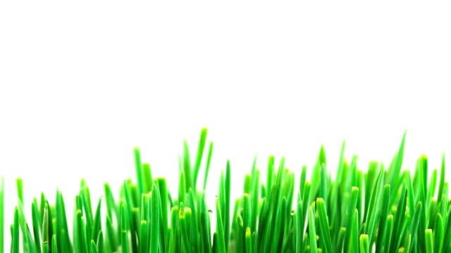Wachsende Gras Zeitraffer