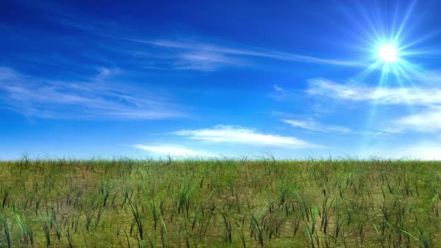 Growing grass timelapse