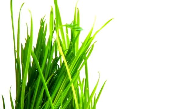 成長の芝生