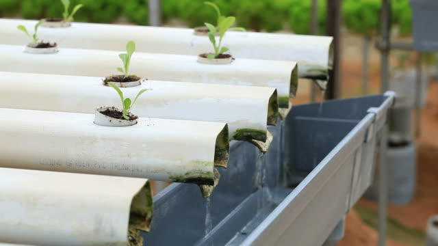 growing hydroponics vegetable - hydroponics stock videos & royalty-free footage