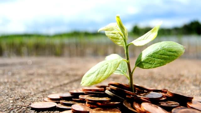 vídeos y material grabado en eventos de stock de el aumento de las inversiones de las monedas de planta - inversión