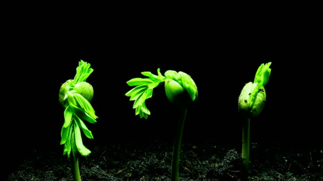 growing plant time lapse - germinating stock videos & royalty-free footage