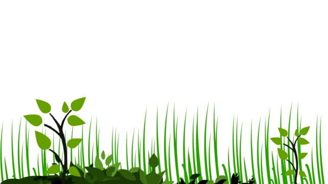 wachsende pflanzen - gras stock-videos und b-roll-filmmaterial