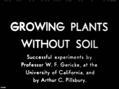 growing plants without soil - 1 of 14 - see other clips from this shoot 2176 stock videos & royalty-free footage