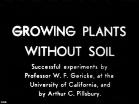 growing plants without soil - 1 of 14 - この撮影のクリップをもっと見る 2176点の映像素材/bロール