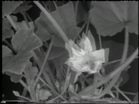 growing plants without soil - 10 of 14 - この撮影のクリップをもっと見る 2176点の映像素材/bロール