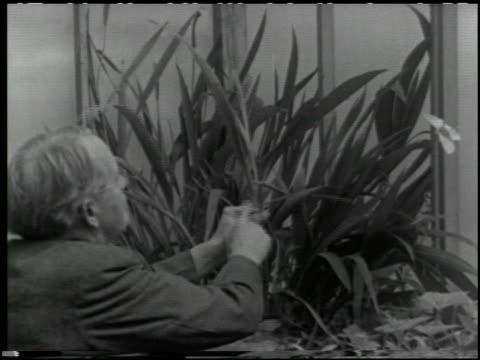 growing plants without soil - 11 of 14 - この撮影のクリップをもっと見る 2176点の映像素材/bロール