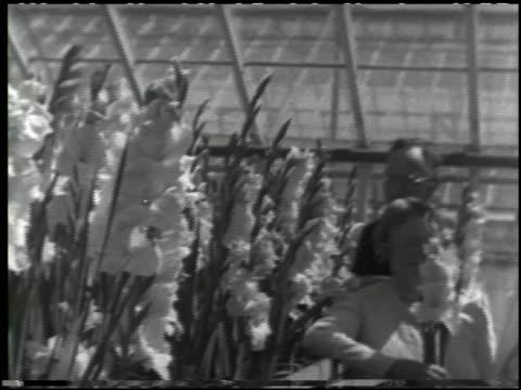 growing plants without soil - 12 of 14 - この撮影のクリップをもっと見る 2176点の映像素材/bロール