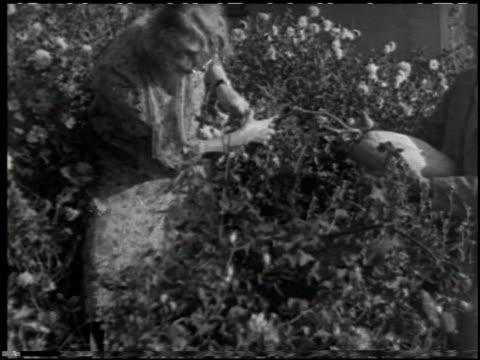 growing plants without soil - 13 of 14 - この撮影のクリップをもっと見る 2176点の映像素材/bロール