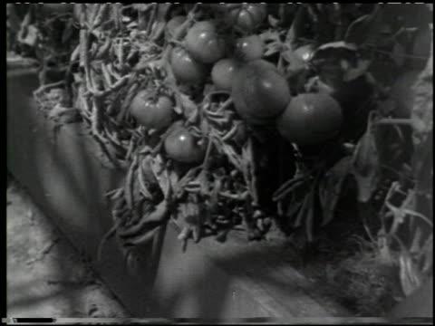 growing plants without soil - 14 of 14 - この撮影のクリップをもっと見る 2176点の映像素材/bロール