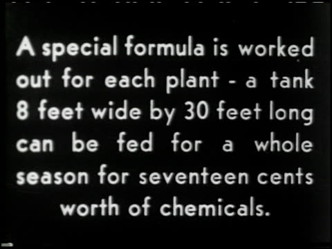 growing plants without soil - 7 of 14 - この撮影のクリップをもっと見る 2176点の映像素材/bロール