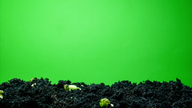 growing seed green screen background time lapse - cultivated stock videos & royalty-free footage