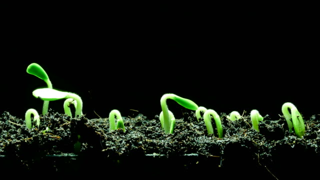 growing seedling - black background stock videos & royalty-free footage