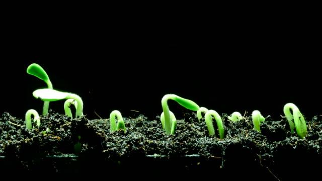 vídeos y material grabado en eventos de stock de crecimiento de plántula - raíz
