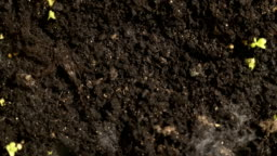 growing small plants on brown ground background place for text, time lapse, Growth Concept