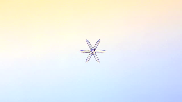 """growing snowflake, timelapse"" - magnification stock videos and b-roll footage"