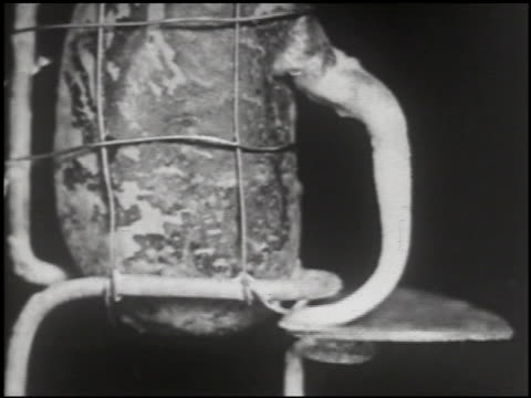 growing things: a film lesson in 'nature study' - 7 of 10 - anno 1928 video stock e b–roll