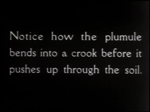 growing things: a film lesson in 'nature study' - 8 of 10 - anno 1928 video stock e b–roll
