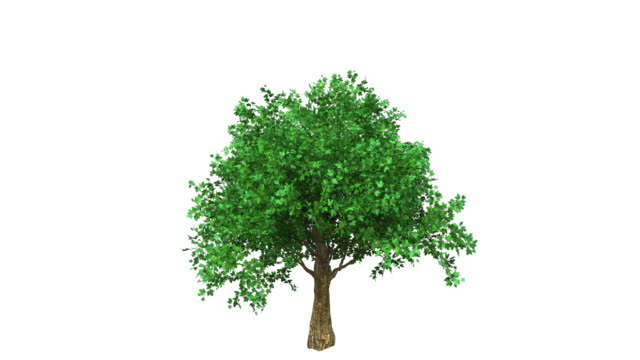 growing tree, colored - tree stock videos & royalty-free footage