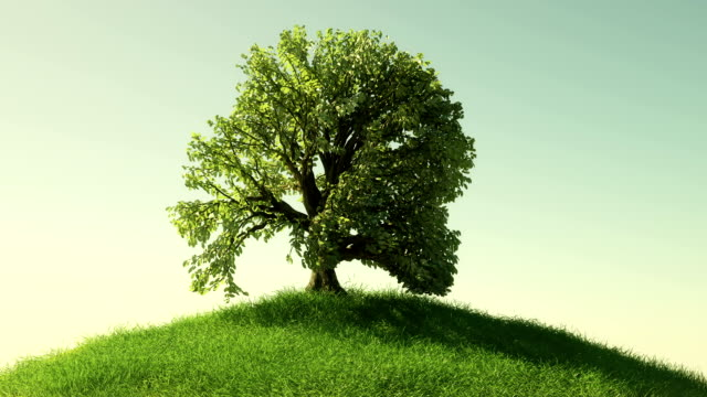 growing tree - growth stock videos & royalty-free footage
