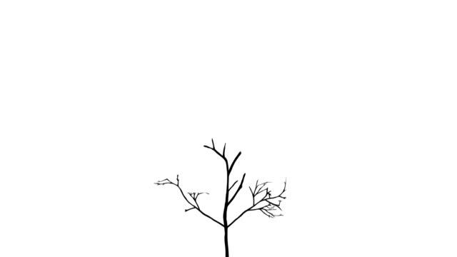 成長の木 - きつい点の映像素材/bロール
