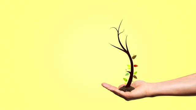 vídeos y material grabado en eventos de stock de árbol creciente - raíz