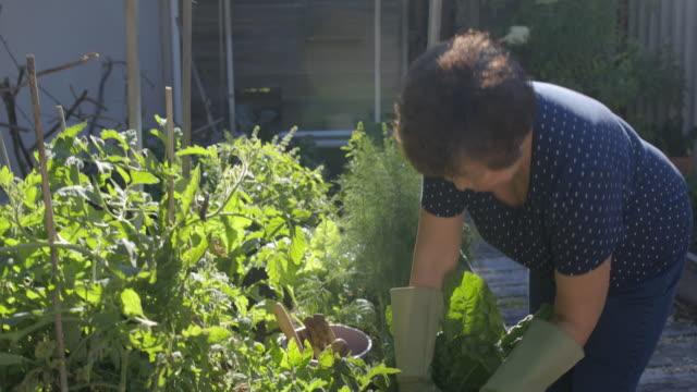 vídeos de stock e filmes b-roll de growing vegetables at home - colocar planta em vaso