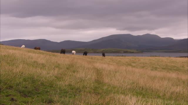 grown horses in ireland - 雄馬点の映像素材/bロール