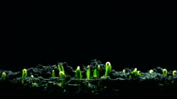 Growth Seeding time lapse black background 4k
