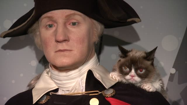 grumpy cat and wax figure of george washington at grumpy cat visits figure at madame tussauds dc at madame tussauds on september 28 2016 in... - ジョージ・ワシントン点の映像素材/bロール