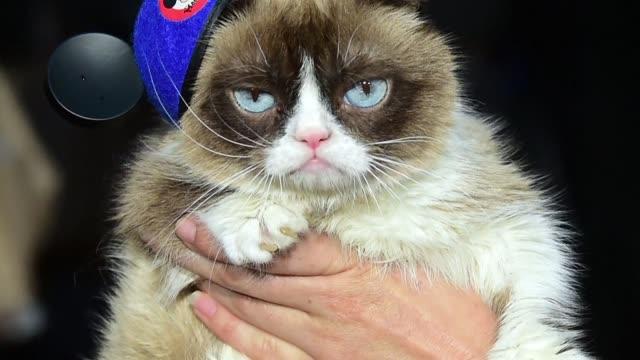 CA: FILE: Internet sensation Grumpy Cat dead at 7