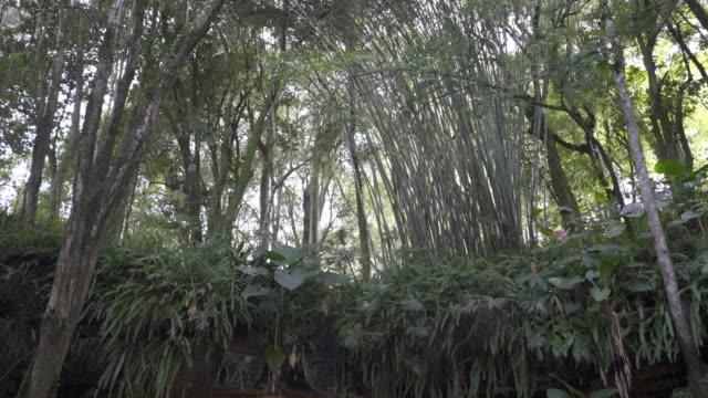 gruta natural de antônio prado, rio grande do sul, brazil. - grotto cave stock videos and b-roll footage