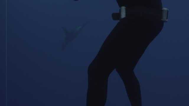 vídeos y material grabado en eventos de stock de guadalupe island, mexico. uw diver in foreground, seal in background. crate of bait. 2012 - escafandra autónoma