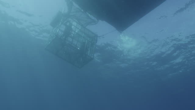 vídeos de stock e filmes b-roll de guadalupe island, mexico. uw low angle shot of shark cage in water, 2012 - preso