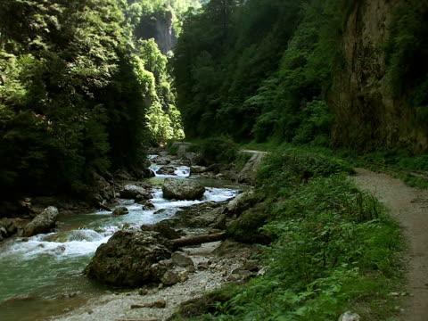 vídeos y material grabado en eventos de stock de guam, kurdjips river gorge - árbol de hoja caduca