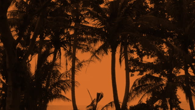 guam usa territory palms and sunset near hagatna capital - guam stock videos and b-roll footage