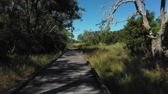 guana boardwalk - gulf coast states stock-videos und b-roll-filmmaterial