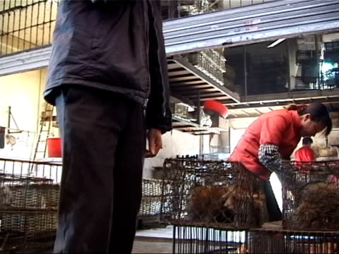 vidéos et rushes de guangzhou: ext cms animals in cages at market cms cages containing animals to be sold wheeled along track cms cages containing live rats to be sold... - marché établissement commercial
