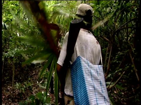 vídeos de stock, filmes e b-roll de guatemalan scouts hack clear path through thick jungle guatemala - grosso
