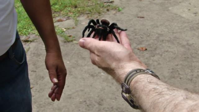 Guatemalan Tarantula in Hand at Tikal