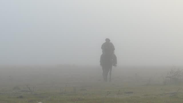 vídeos de stock e filmes b-roll de gucho argentino arriving in a horse with fog at the morning - gaúcho