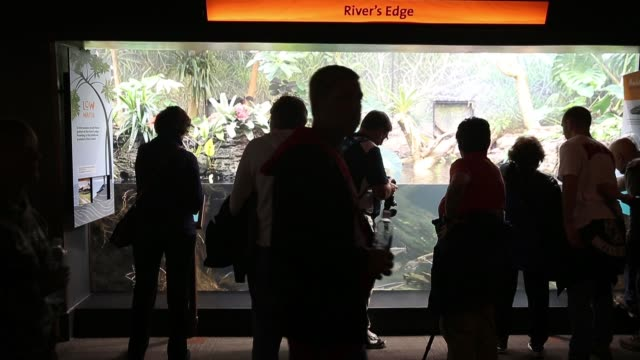 guests check out an exhibit at the john g shedd aquarium on october 3 2014 in chicago illinois shedd aquarium houses 32000 animals and attracts more... - shedd aquarium stock videos and b-roll footage