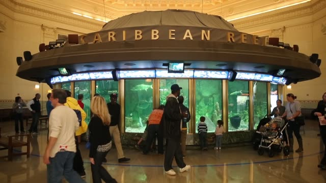 guests check out the caribbean reef exhibit at the john g shedd aquarium on october 3 2014 in chicago illinois shedd aquarium houses 32000 animals... - shedd aquarium stock videos and b-roll footage