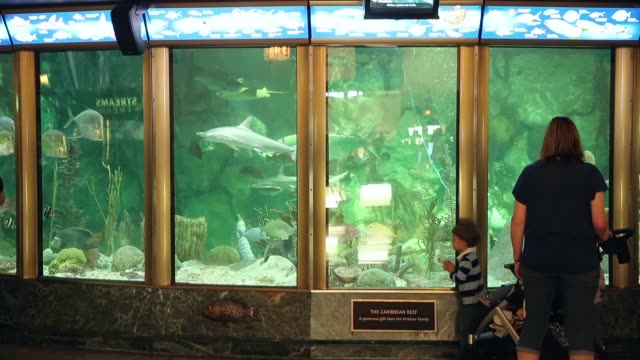guests check out the caribbean reef exhibit at the john g shedd aquarium on october 3 2014 in chicago illinois shedd aquarium houses 32000 animals... - animale in cattività video stock e b–roll