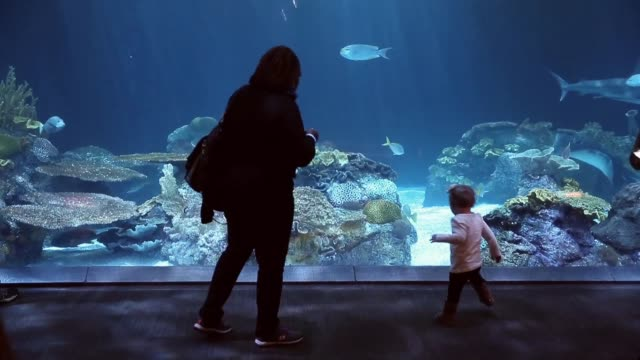 guests check out the shark exhibit at the john g shedd aquarium on october 3 2014 in chicago illinois shedd aquarium houses 32000 animals and... - shedd aquarium stock videos and b-roll footage