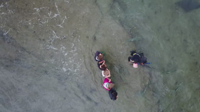 guests feed wild stingrays in the ocean off the gisborne coastline. - stingray stock videos and b-roll footage