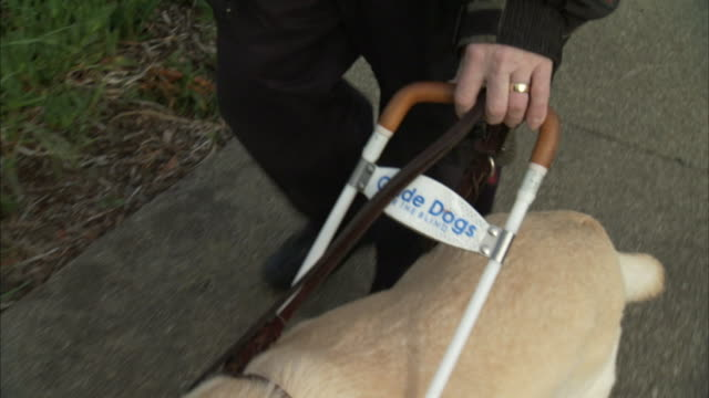 a guide dog leads a blind man along a sidewalk. - blindness stock videos & royalty-free footage