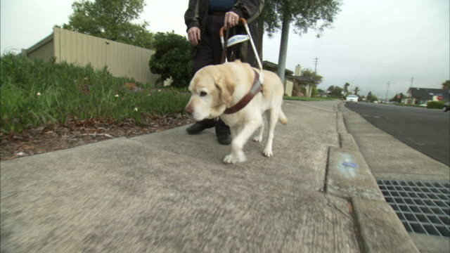 a guide dog leads a blind man along a sidewalk. - visual impairment stock videos & royalty-free footage