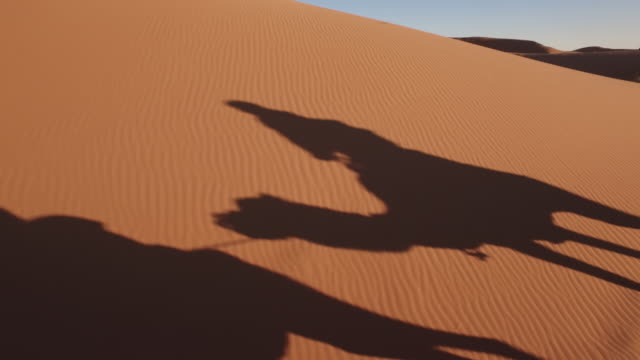 guide find good angle and take photo for tourist - sahara desert stock videos & royalty-free footage